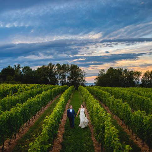 bride and groom holding hands in vineyard